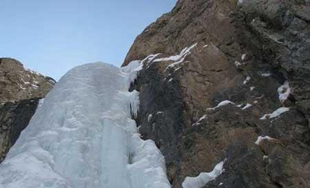 عکس بلبل کوهی