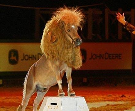 عکس تماشایی از تبدیل اسب به یک شیر جوان