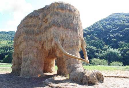 کشاورزان هنرمند ژاپنی همه را متعجب کردند (عکس)