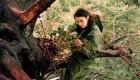 کار عجیب یک دختر برای درختان (عکس)