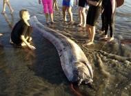 حمله هیولای دریایی به ساحل (عکس)