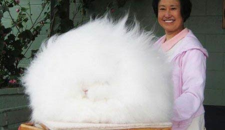 خرگوش به این عجیبی ندیده اید (عکس)