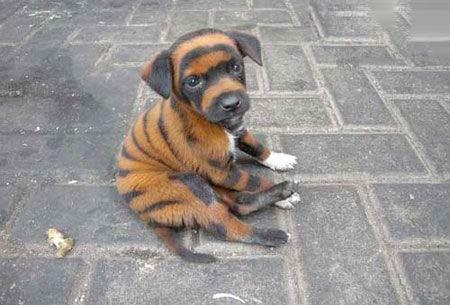 توله سگ هایی که در اینترنت غوغا به پا کردند