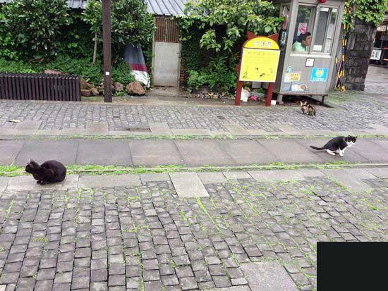 شهری که در احاطه گربه هاست (عکس)