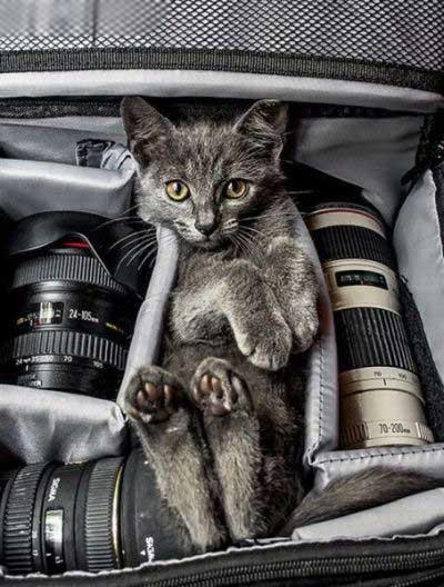 تصاویر جالب و باحال از حیوانات