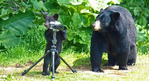 خرس هایی که میمون شدن (عکس)