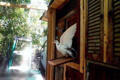 عکس های دیدنی از کبوترهای قاچاقچی