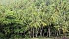 جنگل هایی که در جهان معروفند (عکس)