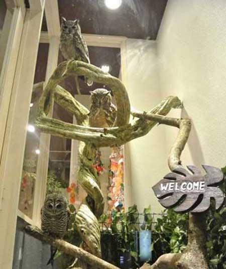 کافه ای در احاطه جغد ها و انسان ها (عکس)