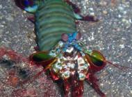 عکس های دیده نشده از موجودات دریایی بی نظیر