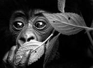 تا بحال با حیوانات چشم در چشم شده اید؟ (عکس)