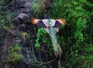 پرواز این پرنده همه را حیرت زده کرد (عکس)