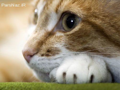 گربه خوری مردم سوریه خبرساز شد (عکس)