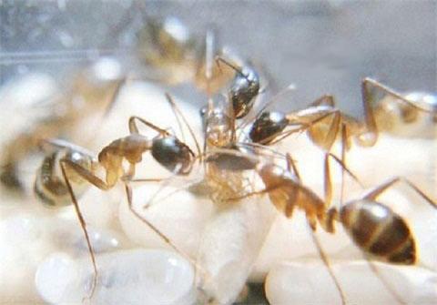 عکس دیده نشده و جالب لحظه تولد مورچه