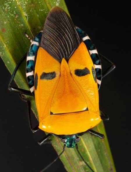 حشراتی با چهره های دیدنی و شگفت انگیز