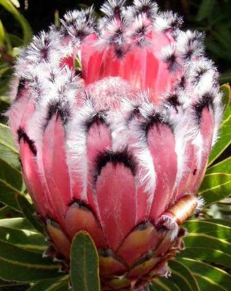 گل های حیرت آور و دیده نشده (عکس)