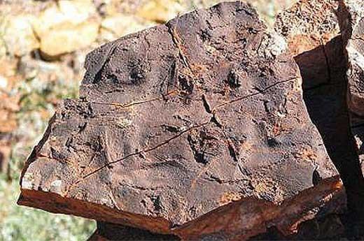 پیرترین موجود جهان با عمر 3.5 میلیارد سال! (عکس)