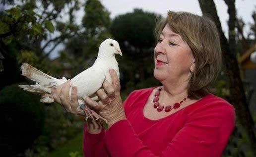پیرترین کبوتر در جهان (عکس)