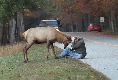 گوزن ناراضی از عکاس ها (تصاویر)