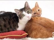 گربه های اشرافی وارث ثروت میلیاردی یک مرد
