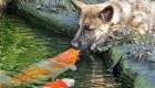 دوستی عجیب ماهی و سگ (+عکس)