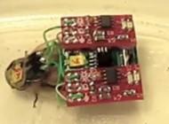 کنترل سوسک با موبایل از راه دور (عکس)