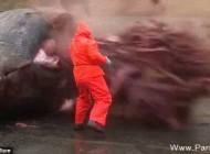 لحظه منفجر شدن شکم نهنگ به خاطره اسپرم + عکس