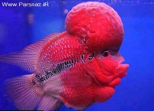 کلیپس ماهی :))