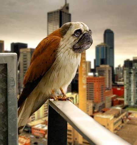 ع های خنده دار و جالب از این پرنده های زیبا