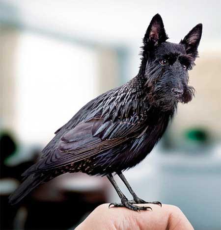 عکس های خنده دار و جالب از این پرنده های زیبا