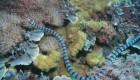 این مارها سمی ترین مارهای جهان هستند + عکس