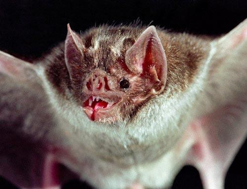 چند حیوانات خطرناک در جهان! (+عکس)