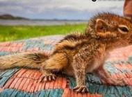 نجات زیباترین سنجاب دنیا توسط این مرد (عکس)