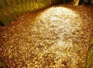 در استخر پول و سکه شنا کنید (+عکس)
