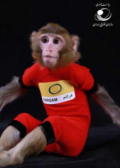 عکس دومین میمون فضانورد ایرانی