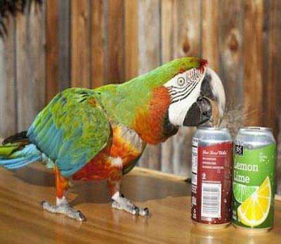 عجیب ترین حیواناتی که در گینس ثبت شدند +عکس