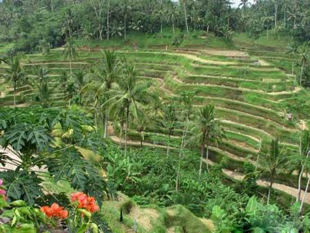 ده مقصد زیبا برای گردشگری در آسیای شرقی (عکس)
