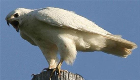 تفریح میلیونی شیخ های عرب با پرندگان ایرانی (+عکس)