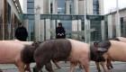 اعتراض جالب خوکها در کشور آلمان + عکس