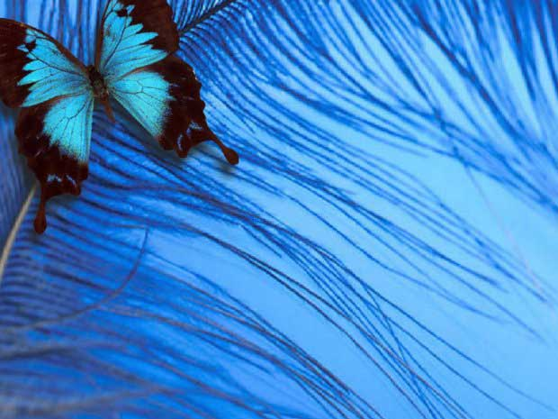 عکس هایی دیدنی از زیباترین پروانه های کمیاب