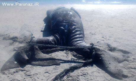 کشف وال دوسر عجیب الخلقه در مکزیک (+عکس)