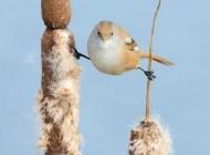 عکس جالب پرنده ژیمناستیک کار (عکس)
