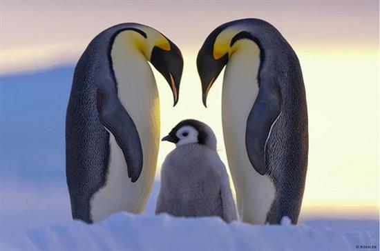 عکس های دیدنی از دنیای جالب حیوانات
