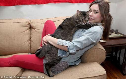بزرگترین گربه در جهان! (عکس)