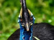 زیباترین پرنده کاسوری با تخم های سبز رنگ +عکس