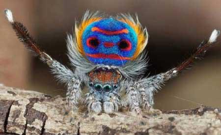 عکس های دیدنی و شگفت انگیز از حیوانات عجیب