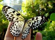 عکس های پروانه های شگفت انگیز و زیبا