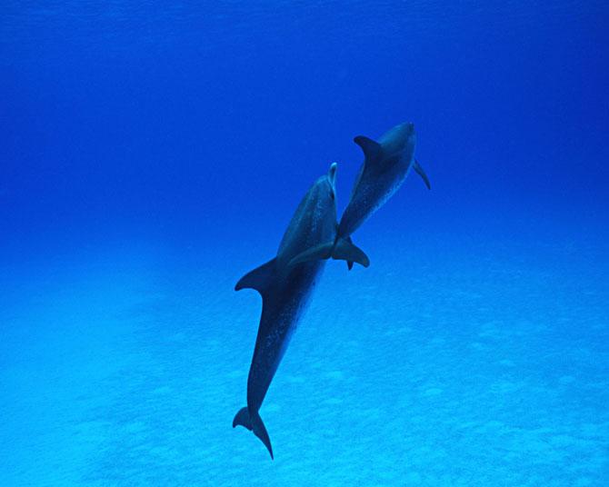 عکسهای دلفین های زیبا در دریا