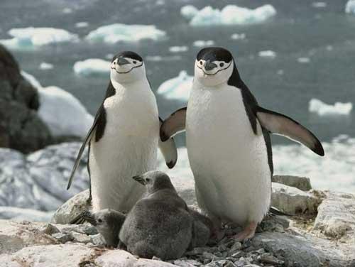 عکسهای دیدنی از حیوانات حیات وحش