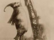 وقتی فیلی قصاص می شود یعنی اعدام + عکس